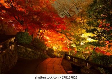 Light up of trees in autumn season