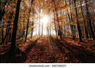 Light trough trees