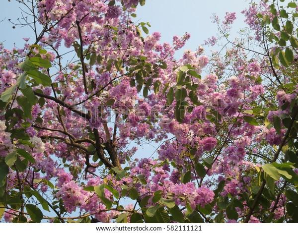 light violet flower on top of tree