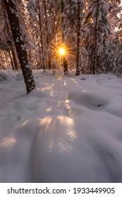 Light in a winter forest in Östergötland county, Sweden