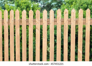 Light wooden fence in front of green coniferous tree