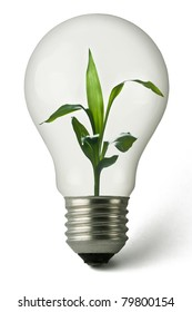 Lightbulb with a plant growing inside