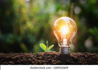 lightbulb with small plant on soil and sunshine. concept saving energy in nature