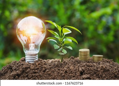 lightbulb with small tree and money stack on dirt. concept saving energy