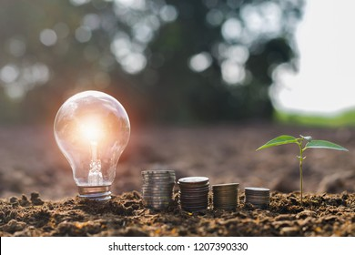 lightbulb with small tree and money stack on soil in nature sunset background. concept saving energy