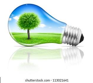 Lightbulb with a tree growing on field under blue sky inside