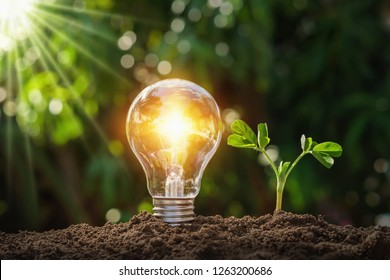 lightbulb with young plant on soil and sunshine. concept saving energy in nature