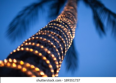 lighted coconut  by small led light bulbs those bind ed around the trunk with blue sky at twilight in the background.