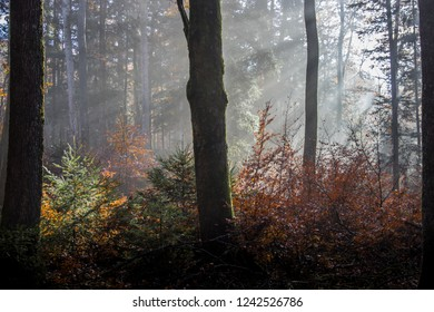 Light-flooded autumn forest in the Black Forest, Germany