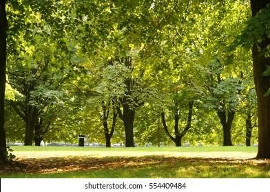 The light-flooded oak grove