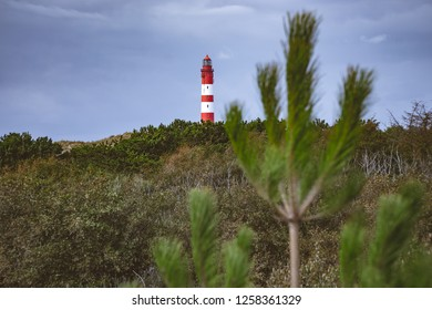 Lighthouse in front of a conifer in Amrum Germany.