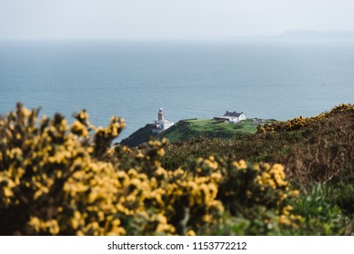 Lighthouse on Ireland Coastline with Flowers on a Beautiful Day