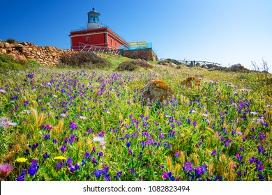 Lighthouse in spring surrounded by a field of violet flowers. Capo Spartivento Lighthouse in the coast of Teulada, Sardinia.