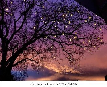 Lights decorated with autumn leafless on dry tree Yellow background Red blue sunset Wonderful color tones contrast abstract background.