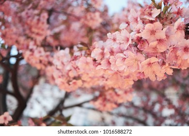Light-up cherry blossoms