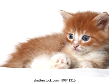 likable kitten on a white background