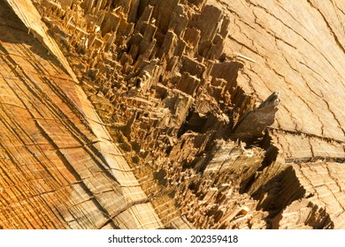 Like a city on another planet, spectacular close up of tree stump, chain sawn and torn when the tree fell