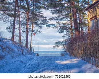 It's like a fairytale. Winter Baltic Sea and Pines in Jurmala, Latvia.