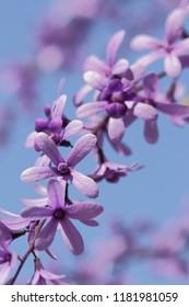lila flowers and blue sky