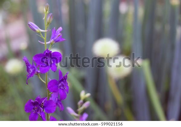 Lila Plants Pastel