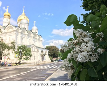 Lilac in bloom in the Moscow Kremlin, with the Cathedral of the Archangel, dedicated to the Archangel Michael, in the background