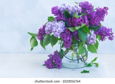 Lilac blooming bunch in vase on gray background