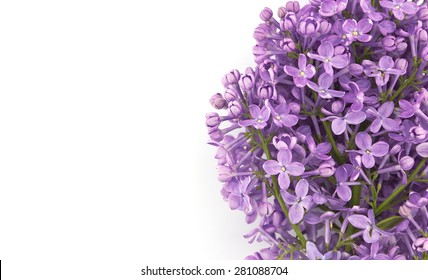 Lilac blossom isolated on white background with empty space for greeting message. Mother's Day and spring background concept.