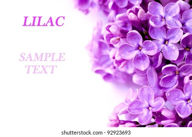 Lilac branch with sample text