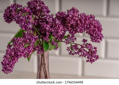 Lilac branches with purple and violet little flowers are standing in transparent glass vase against tiled white wall