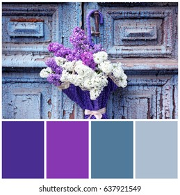 Royalty Free Lilac Colour Images Stock Photos Vectors Shutterstock