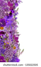 lilac color strip from different flowers isolated on white background