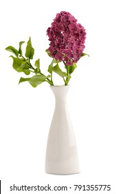 Lilac flower in a vase