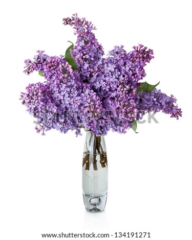 Lilac Flower Vase Isolated On White Stock Photo Edit Now 134191271