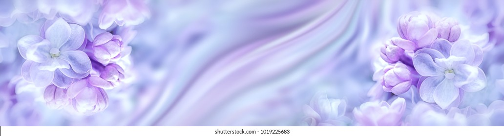 Lilac flowers bloom branch panorama. Greeting gift card background . Toned image. Template banner