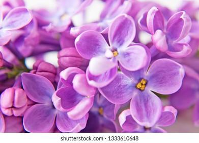lilac flowers closeup background