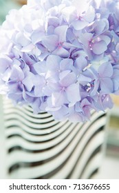 Lilac flowers of great blossoming hortensia