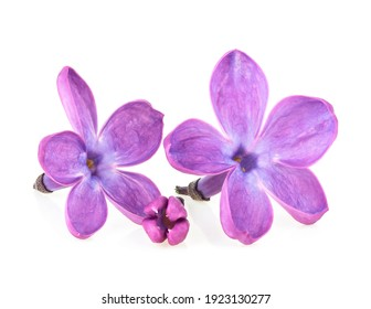 Lilac flowers isolated on a white background. Deep focus. Macro image.