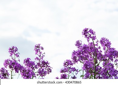 lilac flowers on a background of the sky