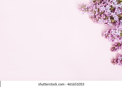 Lilac flowers on pink background from the top