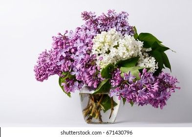 Lilac flowers in vase against white background