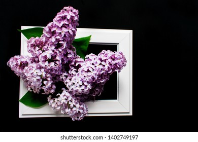 Lilac flowers in a white frame on a black background.