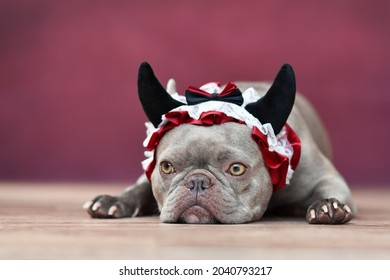 Lilac French Bulldog dog wearing red devil horn headband with ribbon in front of red background