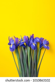 lilac irises lie on a yellow background. top view. flatlay.