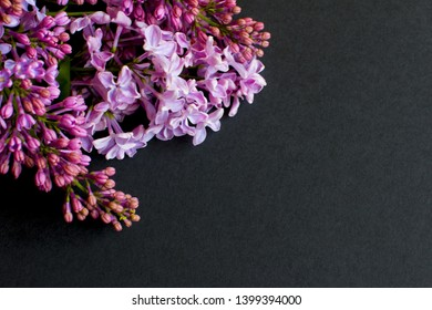 Lilac on black background. Lilac flowers.