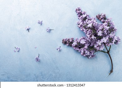 Lilac on a blue background.  floral background with spring flowers, top view.