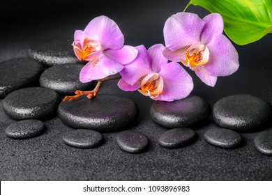 lilac orchid (phalaenopsis), zen stones with drops and green leaf on black background