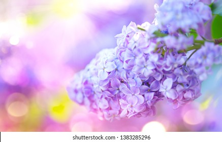 Lilac spring flowers bunch violet art design background. Beautiful blooming violet Lilac flower in a garden, closeup. Watercolor nature floral backdrop. Fragrant Spring Blossom. Easter.