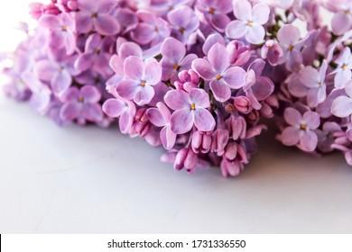 Lilac-Zweige auf der Fensterlila-Farbe schließen