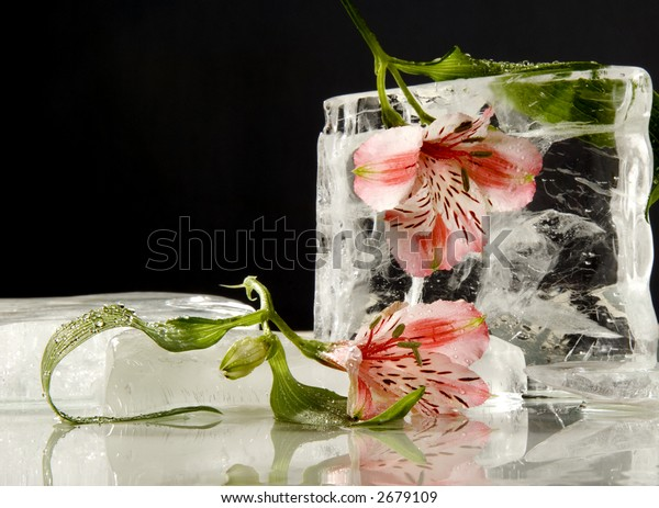 Lilies with clear ice pieces