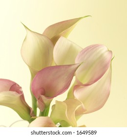 Lilies, close up.